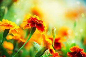 San Jose Addiction Counseling Herbal medicine